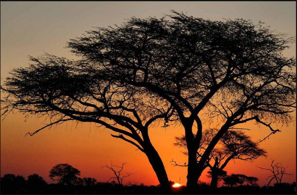 Zimbabwe 4